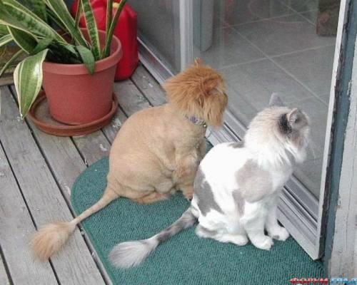 Стрижка для котов, город Рязань