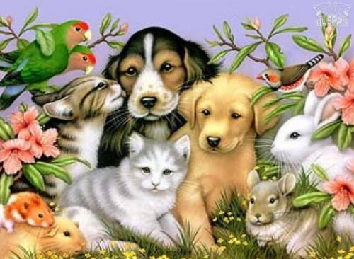Лечение животных, город Рязань
